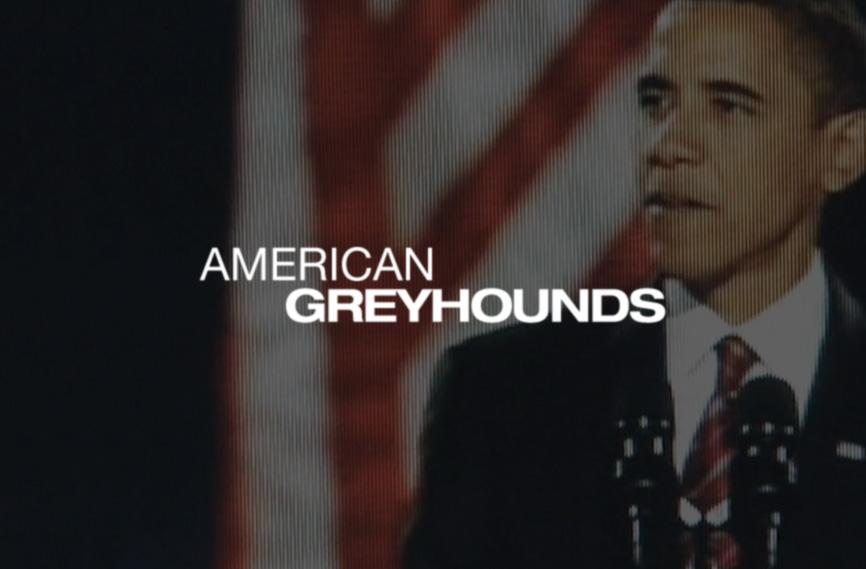AMERICAN GREYHOUNDS